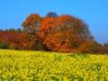 Herbstwanderung2015_002