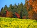 Herbstwanderung2015_003