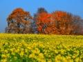 Herbstwanderung2015_008