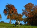 Herbstwanderung2015_018