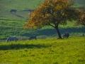 Herbstwanderung2015_022