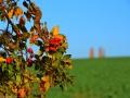 Herbstwanderung2015_023