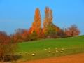 Herbstwanderung2015_027