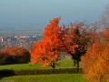 Herbstwanderung2015_031